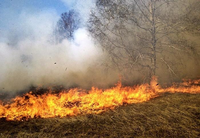 Pożar trawy Kamionka Wielka