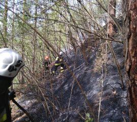 ul. Jamnicka Nowy Sącz – 26.04.2019 – Pożar lasu
